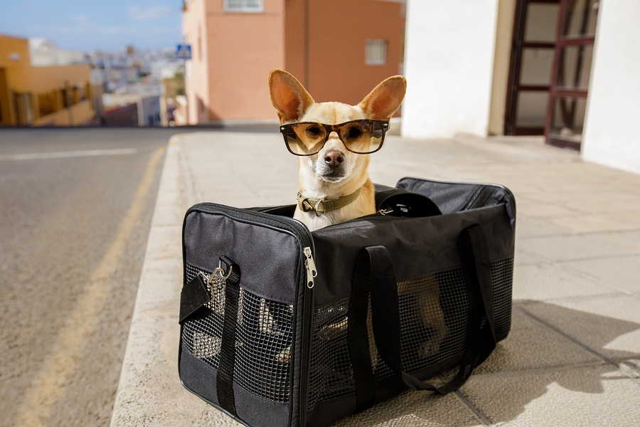 Pet-friendly Private Jet Charter Services with Cirrus Aviation