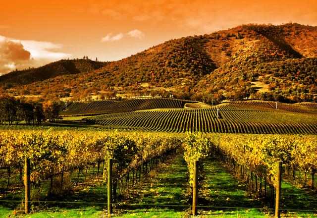 bigstock-Rows-Of-Grape-Vines-In-Vineyar-4568696.jpg