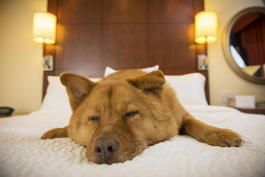 pet friendly vacation hotel