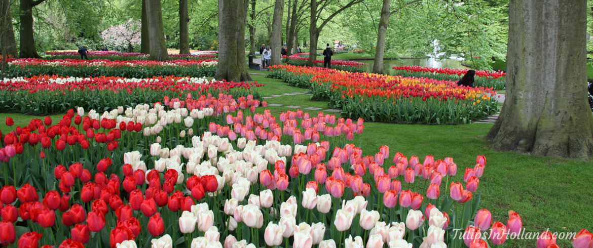 frequently-asked-questions-about-keukenhof